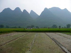 rizieres-yangshuo